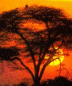 [African Sunset!]